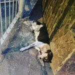 Poor dog in #colombo 15 we dont know whats wrong or hav a number for person who sent pic plz help? #URGENT #srilanka https://t.co/Z8qs6JTdmv