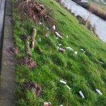 Is het werkelijk zo vermoeiend om iets verder te lopen en het afval daar te dumpen waar het hoort?! #stadshagen https://t.co/7PdLi4KYBJ