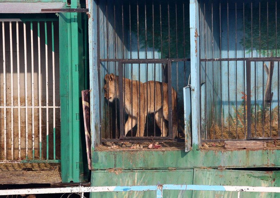 Please RT @iansomerhalder @rickygervais @BJLaflin - £46k needed to rescue abandoned lions:https://t.co/Ojeg2jyJwa https://t.co/yPtwafLCBW