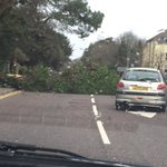 @Bournemouthecho winbourne rd blocked , that was a close shave https://t.co/5B5nHCnv5x
