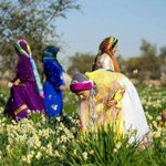 Let #Spring come early 2 #Iran w/ flower picking & love to all #jareh #baladeh #kazeroon #fars #traditional #flowers https://t.co/tfki8ucGEj