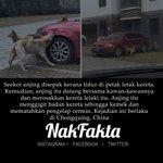 Anjing datang balas dendam di Chongquing, China #nakfakta #nakbebel https://t.co/SuilwxSXlo