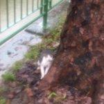 Bangla yang kau hina tu, dia jugaklah terjun longkang selamatkan kucing yang lemas. https://t.co/enFsq8fHWe