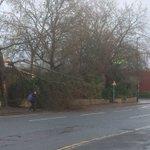 branch blocking the lane for Sainsbury turn off on Lower Bristol road. @BathCoUK @BathChron @BathEcho https://t.co/6cY4sT3Tuc