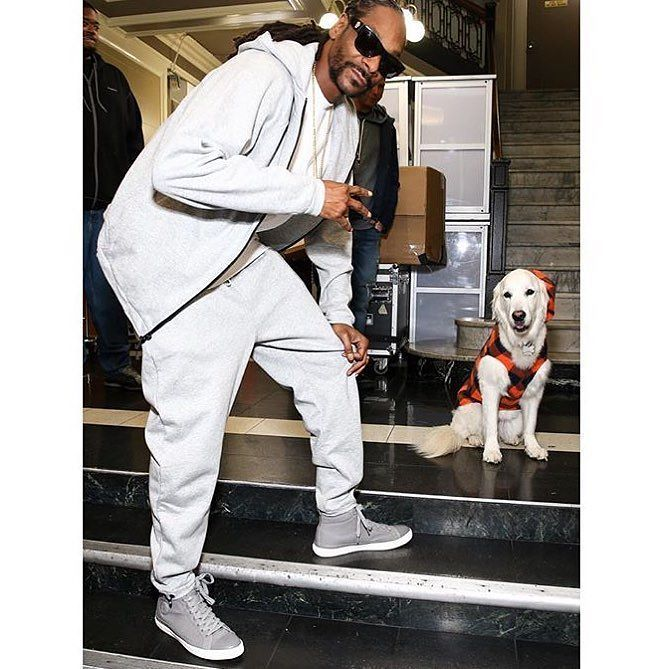 Stanley my dogg ????✨???????? https://t.co/GZ397jLz0l