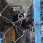 Denuncian que perros están en precarias condiciones en galpón municipal de Coyhaique https://t.co/A9IxFRVw21 https://t.co/osjBUQyZUn