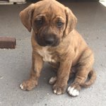 #Santiago #Adopta a 1 de 10 cachorritas d 3 meses serán #medianas #doglover #Chile https://t.co/9IepapOBH5 https://t.co/QmGhqxPuZS