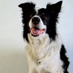 Crean prueba que mide inteligencia en perros y que podría ayudar a los humanos https://t.co/AeeJ3yoFsB https://t.co/RiZOILE9Ob