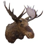 #starNEnews A Moose On The Loose At #Darlington Auctioneers https://t.co/ZifTItYEDn https://t.co/zs4FLQvNc0