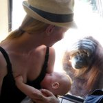 Elizabeth was @MelbourneZoo on Sunday when she had this beautiful moment with an orangutan. #774Drive @Raf_Epstein https://t.co/feZDexFAGa