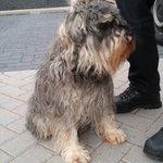 Deze hond hebben wij zojuist aangetroffen op de Zijlsingel te Leiden. Heeft iemand een idee wie de eigenaar is? ^JP https://t.co/iTO0y637WF