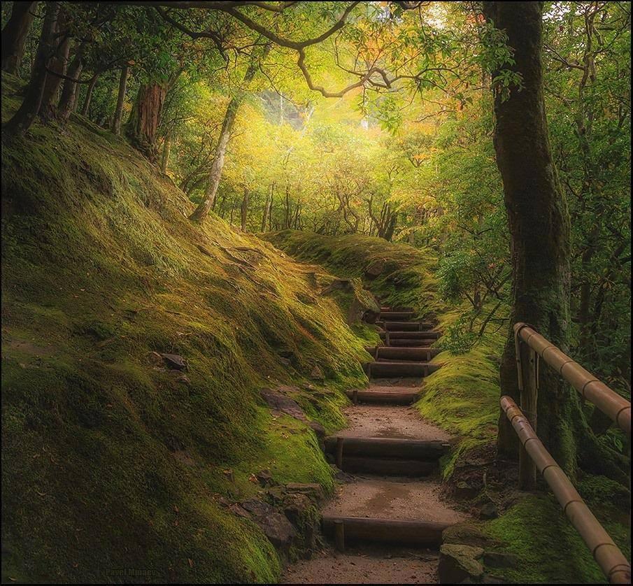 Stairway to Heaven, Kyoto | Photography by ©Pavel Minaev https://t.co/tv939YMlkk