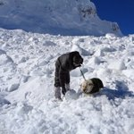 Stellar role by Avalanche dogs like this one in finding Lance Naik Hanamanthappa. Photo from the rescue site. https://t.co/pFsBCsoVIZ