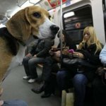 Los perros podrán entrar en el Metro de Madrid en horas valle y los fines de semana https://t.co/1vsouWNnPn https://t.co/8UxCSFv2zE