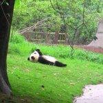 En definitiva, quiero ser un panda. https://t.co/xtrhUqtxi2