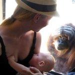 #ICYMI: Breastfeeding mother amazed by orangutans reaction during @MelbourneZoo visit https://t.co/29elkU18cn https://t.co/Miu7xpuM0r
