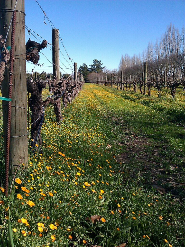 More signs of Spring around the Valley. It's been a beautiful week. #sonomavalley #signsofspring #clinecellars https://t.co/iVPZMFhMZz