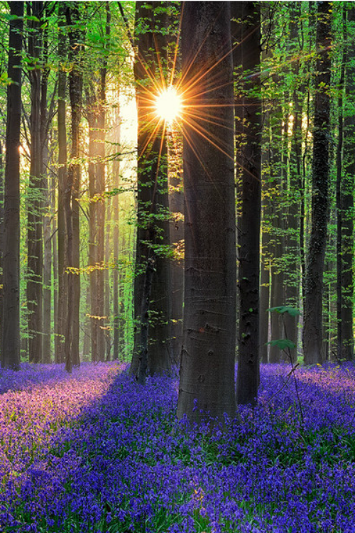 Sunshine in the forest | Photography by ©Walter Spoor https://t.co/QY80nm6U0l