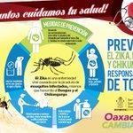 Implementa @GobOax plan de abordaje integral para prevenir y controlar el virus del Zika, dengue y chikungunya. https://t.co/raDgmmqYdW