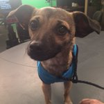 Meet Teddy.. This weeks #PickOfTheLitter! You can adopt him at @SpokAnimal! https://t.co/730Hwyimg8