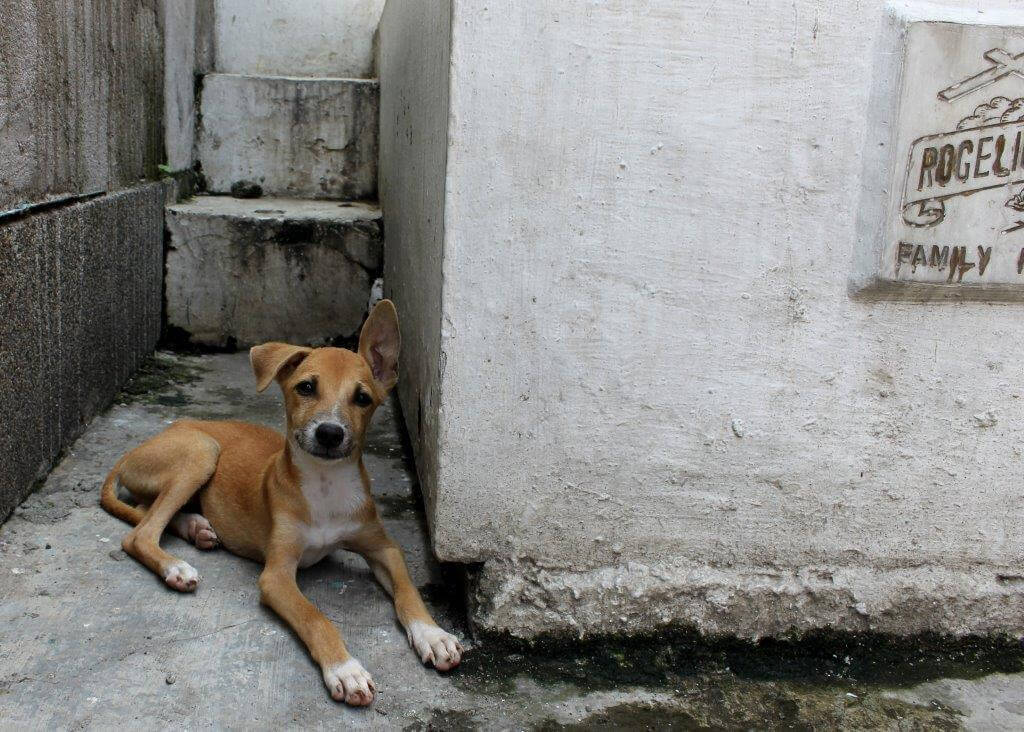RT @PETAAsia: How PETA is saving lives in a cemetery in the #Philippines: https://t.co/wlL75G53cj ????????❤ #SpayNeuter https://t.co/veMwALFjCv