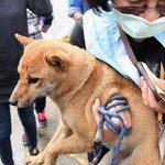 【台湾南部地震】ペットのシバイヌ、6日ぶり救出 直後は怖がるが、まんじゅう食べ落ち着く https://t.co/TLzKLdi6zC https://t.co/jSMLgzgZ7Y