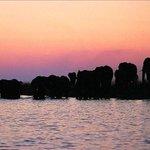 MAGNIFICENT CHOBE RIVER!  Elephants at sunset. Image from #SiyabonaAfrica #ExperienceBotswana #Botswana https://t.co/i8vt3JbTJw