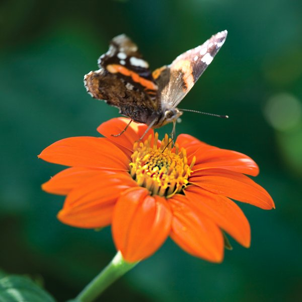 Read this wonderful blog post about the best plants for pollinators by the Secret Gardener  https://t.co/cSZDzAH9D1 https://t.co/QH04Ibb6uA