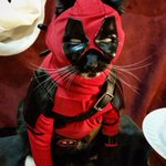 """""""The Merc with the Meow"""" """"The Merc who can Mouse"""" """"The Meowcenary"""" Whats a good Catpool Tag Line? #Deadpool https://t.co/Rhp1Gl2Pym"""