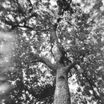 Up #believeinfilm #Holga #ilford Will be in my TRAPPED. On Film solo exhibition. 11 more days to go! #ldnont https://t.co/ur3n1gVuNx