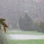 Ven a pasear bajo la fresca lluvia de verano en el @BotanicoUACh, una tradición al estilo #Valdiviacl @thisisChile https://t.co/YHUoC0fnq3