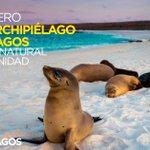 Un abrazo a las familias del Archipiélago,cuidemos el mágico territorio q Dios puso en nuestra Nación #VivaGalápagos https://t.co/eDCDAzeauY