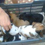 Abandonaron a  estos 9 perritos en la costanera de Posadas. Quienes quieran adoptarlos llamar al 0376-154675667 https://t.co/9PCF3lz196