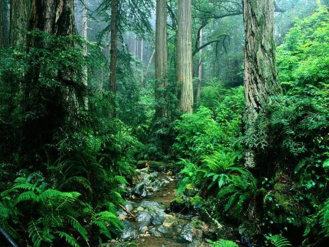 Studies show forests make us happier. https://t.co/AtvozLyhyQ #HappyFriday https://t.co/jpi2rEts0h