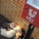 近所のセブンにて 地域ネコたちが 陽だまりで 「ネコたまり₍˄·͈༝·͈˄₎◞ ̑̑ෆ⃛」 になってたwww https://t.co/cS17FNW0Th