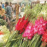 Tk12cr #flower bonanza ahead of #Falgun, #ValentinesDay https://t.co/g37Z4LHlNH #Bangladesh https://t.co/ZtCRuBc9JY