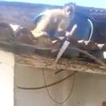 2016, Ano Chinês do Macaco de Fogo. https://t.co/pQWZ328wTC