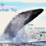 Happy World Whale Day! #SeaShepherd #seashepherdsandiego #sandiego #whales #whale #worldwhaleday #humpback #ocean https://t.co/ZdNL9h2m6g