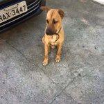 """Esse cãozinho está perdido no Vital Brasil!!"" Anonima https://t.co/DEtcxEDF6X"
