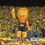 Hoje o Leão vai entrar em campo pela Copa do Nordeste e quem tem os canais EI vai poder assistir a esse jogão! https://t.co/WUJbAuY5lm
