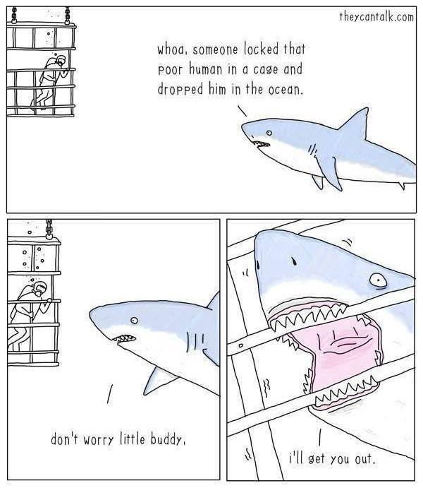 Shark love. It's real. And it's reciprocated ><> ... https://t.co/aD1My4XGbG