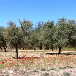 The beautiful countryside in Ibiza, make sure you explore while visiting. Escape the resorts https://t.co/jHsUtMo5FJ