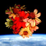 Nursed the #SpaceFlowers all the way to today and now all that remains are memories. Happy #Valentines Day! https://t.co/blJMoIOYEe