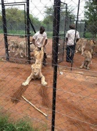 黒人が動物に強く接してる画像好きだな https://t.co/QSN47RNw9p