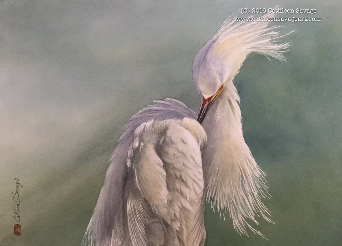 """Finished! """"Wind and Snow,"""" Snowy Egret, #watercolor on Arches cold press, 20"""" X 28."""" #birdart #art #painting https://t.co/UyCyN6ZP6V"""