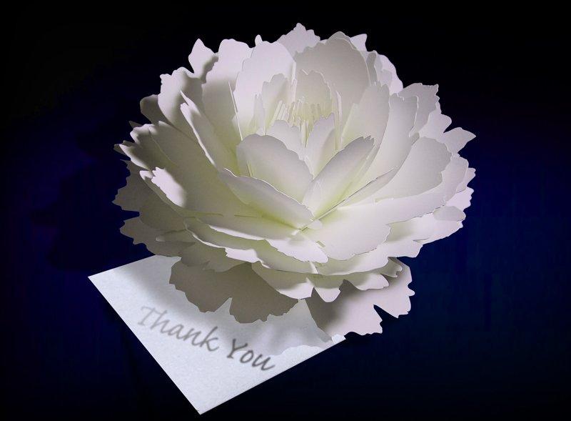 【takeopaper. com:あの紙、この紙】「PAPER & ARTS」さんに、咲くようにひらく花のサンキューカード〈ピオニー〉をご紹介いただきました。https://t.co/ZV3RrLtEMk https://t.co/kAtKZebMEm