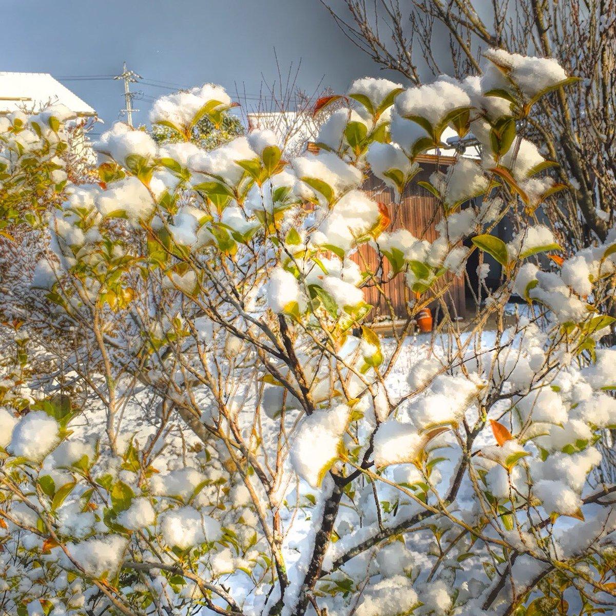 おはようございます( ´ ▽ ` )ノ皆様、雪の花咲く山陰地方です https://t.co/K0Wx0XniOh