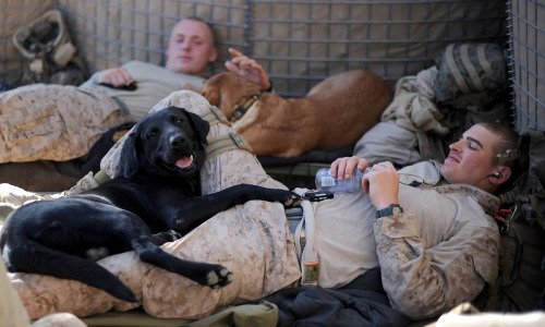 K2 Solutions, Army&Pentagon need2 right this 'Troops betrayed as Army dumps heroic war dogs' https://t.co/cslP5NGJno https://t.co/qF5op7I0P4