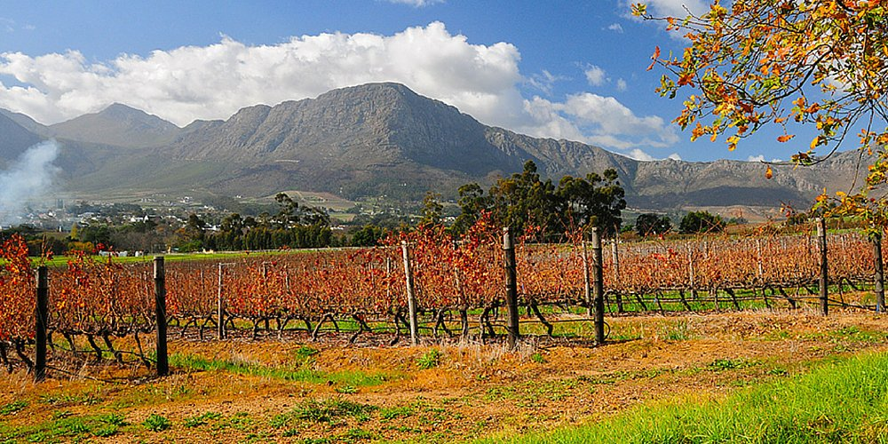 Cape Town + 🍷 = perfection! Just ask @telegraph »
