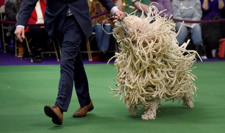 photo evidence of a walking spaghetti monster. wonder if this will cause a rift among the faithful https://t.co/FuW8sC3qVB